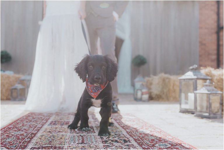 a dog on a lead in front of a bride and groom