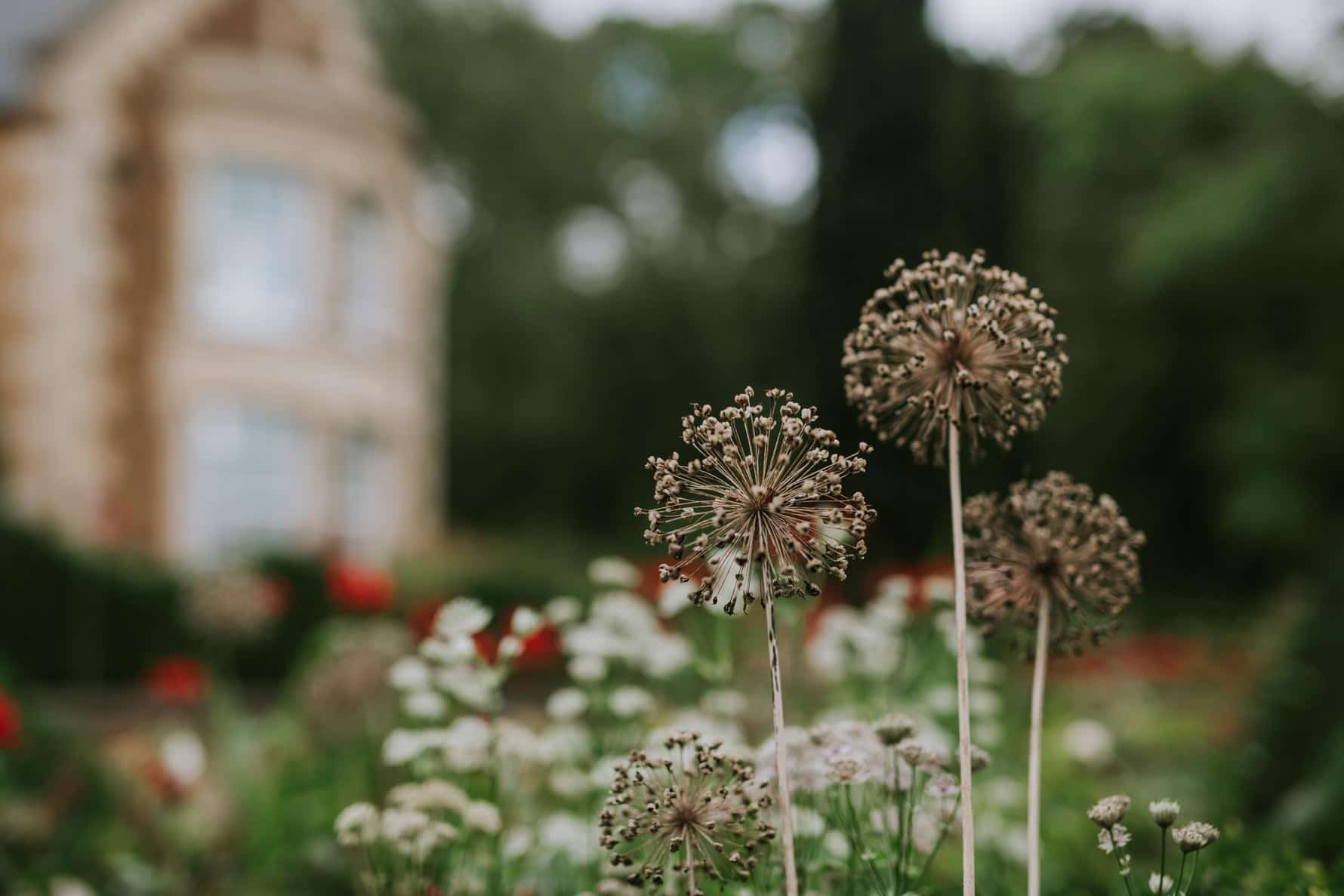 Beautiful flowers in the grounds of ladywood estate - wedding venue