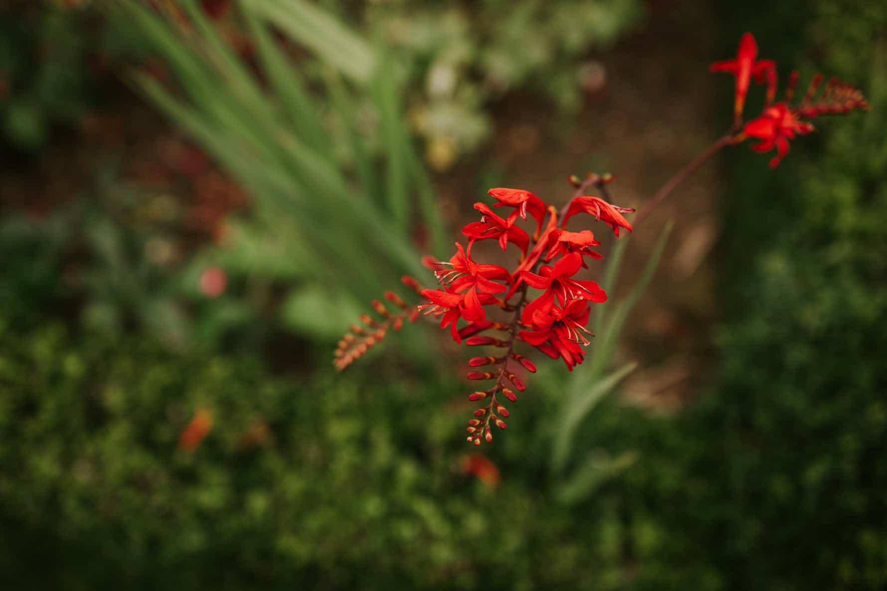 A red flower in a wedding venue garden